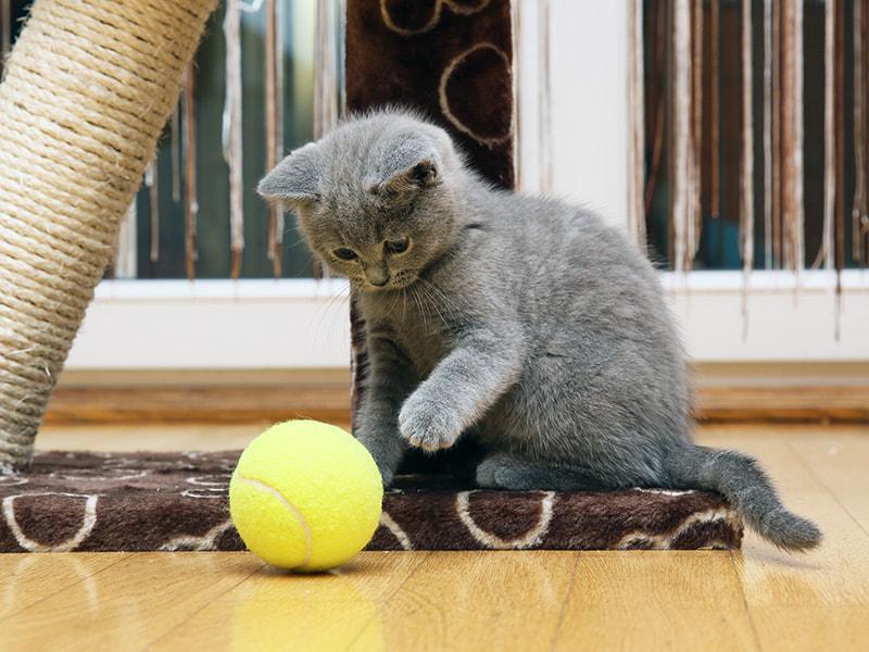 室内で暮らす猫に用意してあげてほしいもの