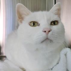 【病院猫】ココ(20歳: オス)